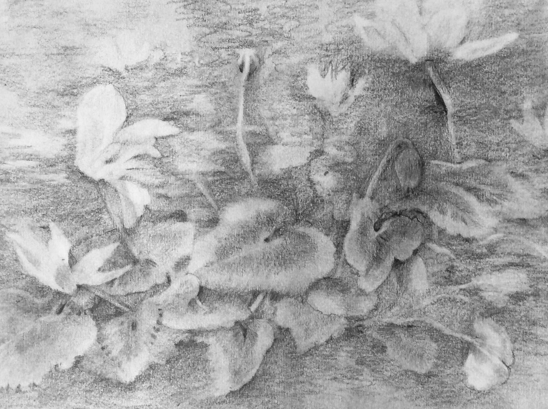 Pencil on paper 22 x 28 cm £175
